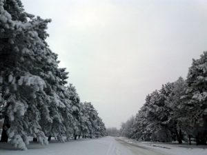 Fotografija Anđele Vujić
